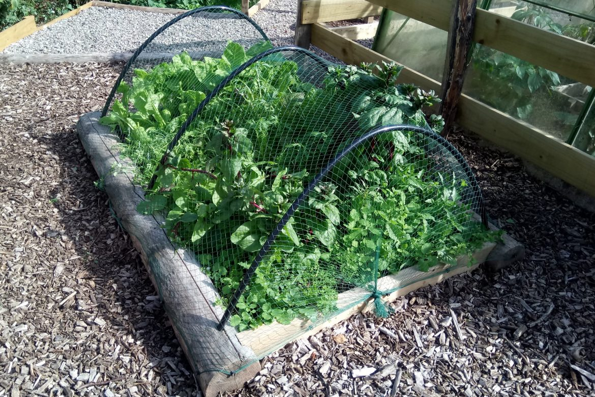 Raised veggie bed after
